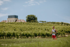 Grad Ilok polumaraton vinogradi