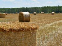 Poljoprivredno zemljište - ilustracija